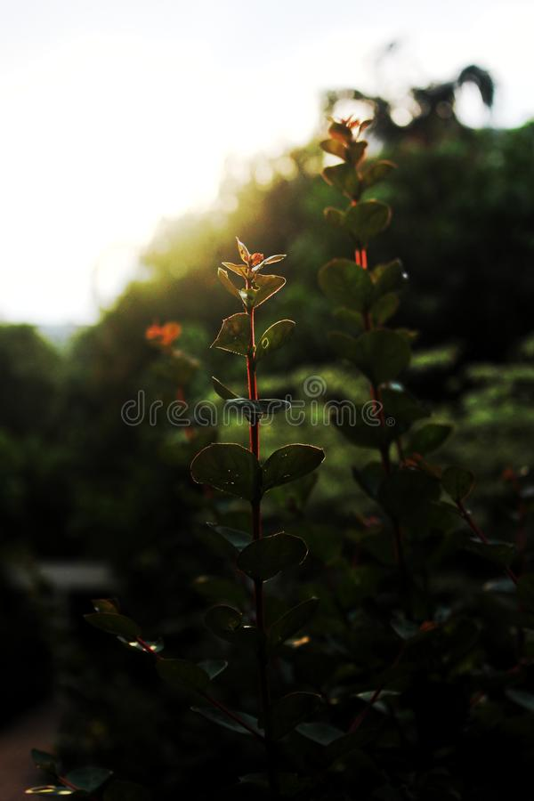 Evening light. And flowers . The sun is falling stock photography