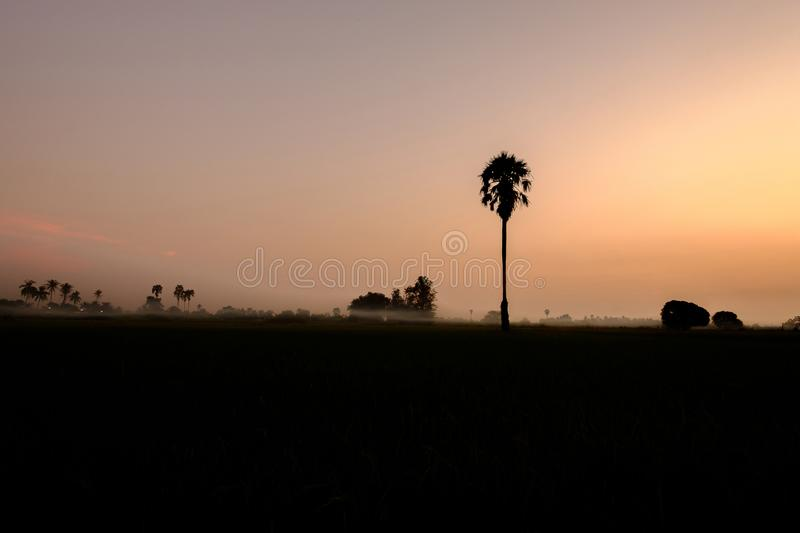 In evening light with the mist. Shadow of sugar palm in evening light with the mist royalty free stock images