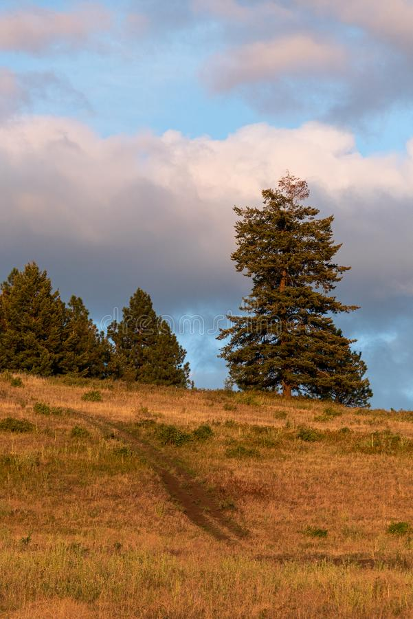 Evening light on pasture with dirt road going up the hill and trees on top, sky with clouds, Eastern Washington State, USA royalty free stock images