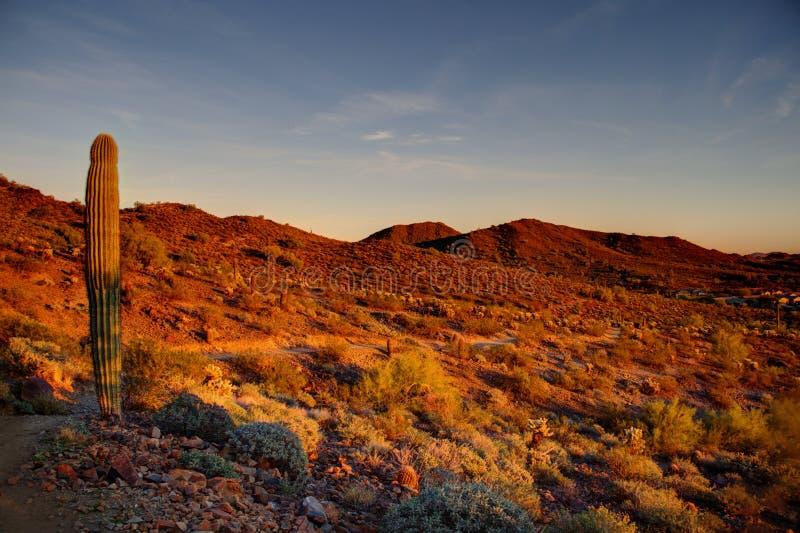 Evening Light. Phoenix, Arizona - The warn colors of a setting sun on the desert landscape of Arizona stock photo
