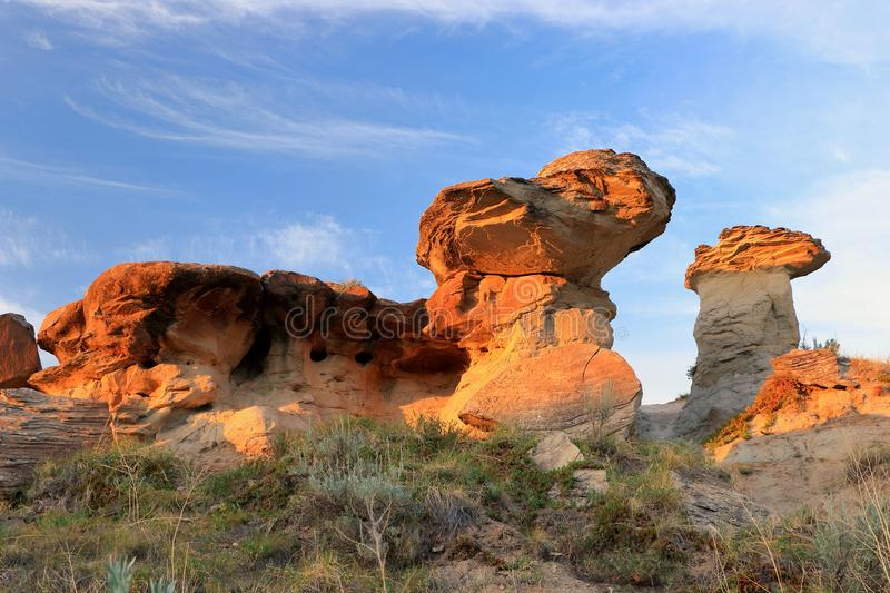 Hoodoos in Evening Light in Badlands, Dinosaur Provincial Park, Alberta. Evening light is shining on these striking hoodoos with their large mushroom capstones stock images