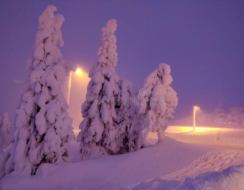 Evening lights on the winter on Lapland Finland.  stock image
