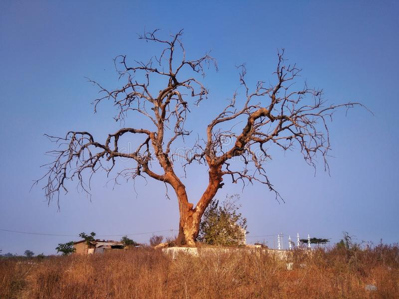 single tree amazing stock photography