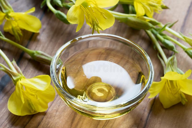 Evening primrose oil in a glass bowl on a dark background stock photos