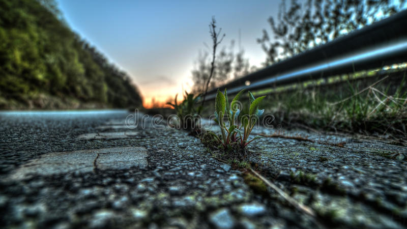 Evening on the road royalty free stock photo