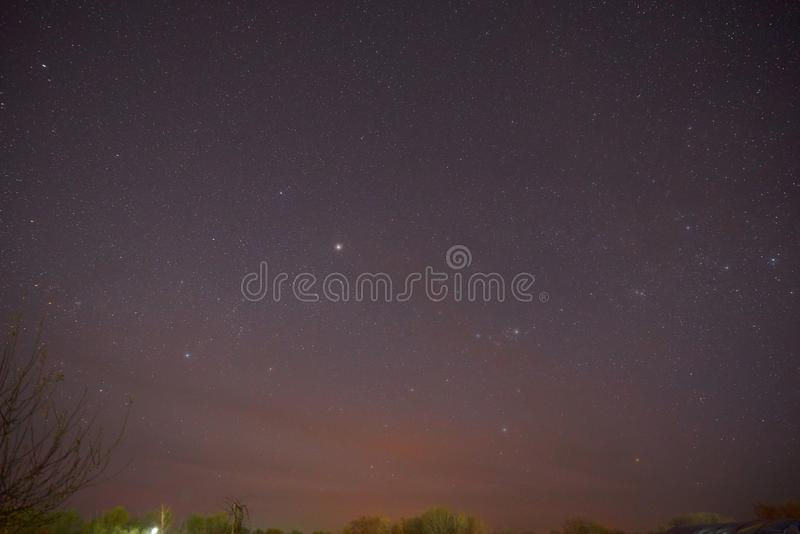 Evening shining starry sky, blue space background with stars. Purple dark sky with many stars above field of trees royalty free stock photos