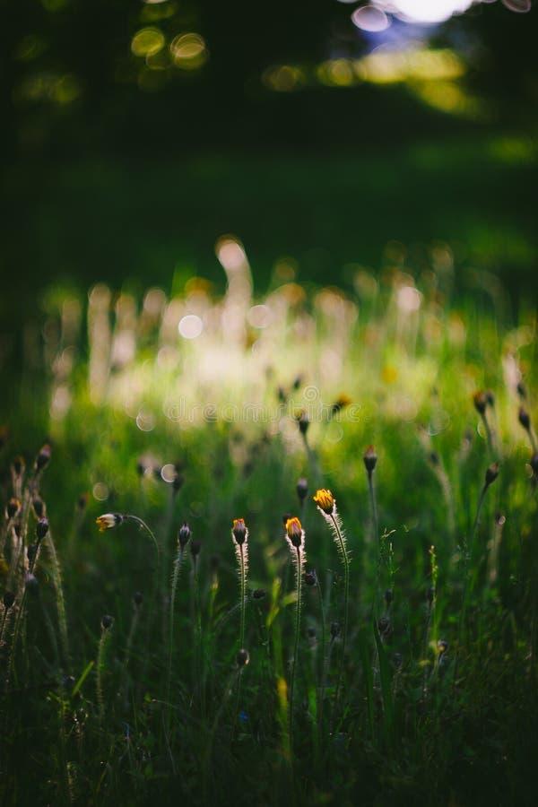 Evening summertime scene. Grass and flowers - evening summertime scene stock photo