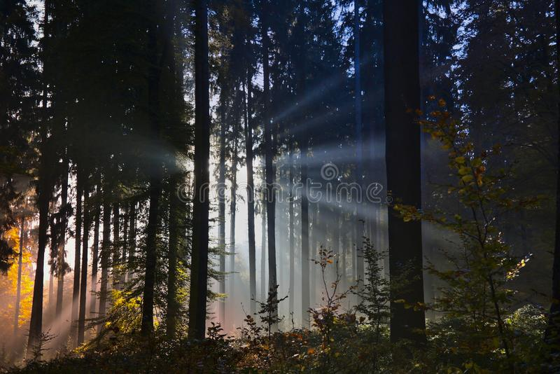 Evening sun rays in an autumn forest royalty free stock photos