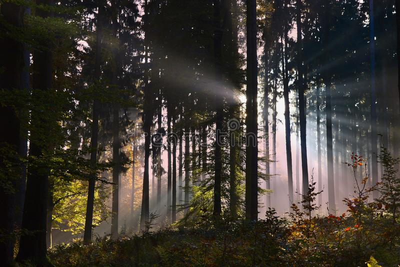 Evening sun rays in an enchanted autumn forest stock photography
