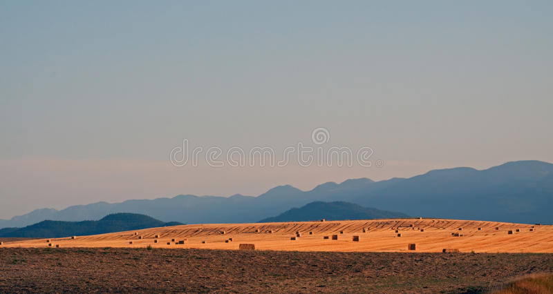 Download Evening Sun On The Ridge Of Hay Bales Stock Photo - Image of harvest, farming: 26792272