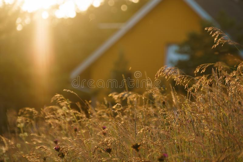 Evening sun with wild flowers in front of a mountain house stock images