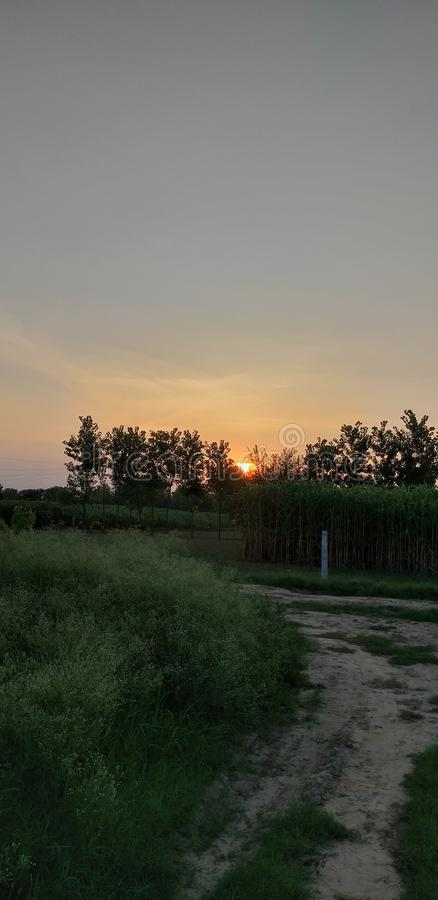 Evening time. In field stock image