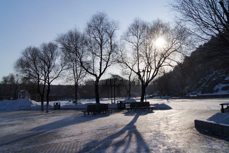 Evening Tree Shadow 2 royalty free stock photography