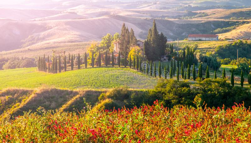 Evening in Tuscany. Hilly Tuscan landscape with cypress trees alley and farm house, Italy.  royalty free stock photography