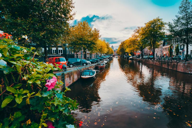 Evening twilight over beautiful Amsterdam canals in autumn. flowers in foreground.  stock photos