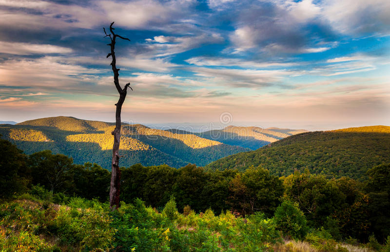 Evening view of the Appalachians from Thoroughfare Overlook, along Skyline Drive in Shenandoah National Park, Virginia. Evening view of the Appalachians from royalty free stock image