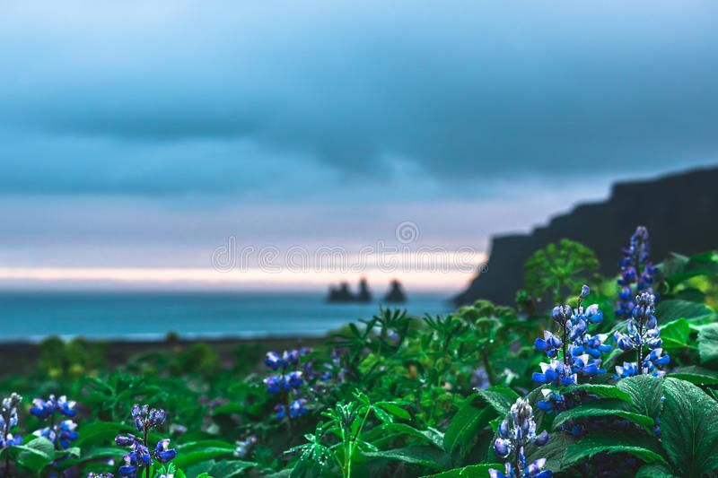 Evening view of the famous black sand beach Reynisfjara in Iceland Vik i myrdal town on the South of island stock images