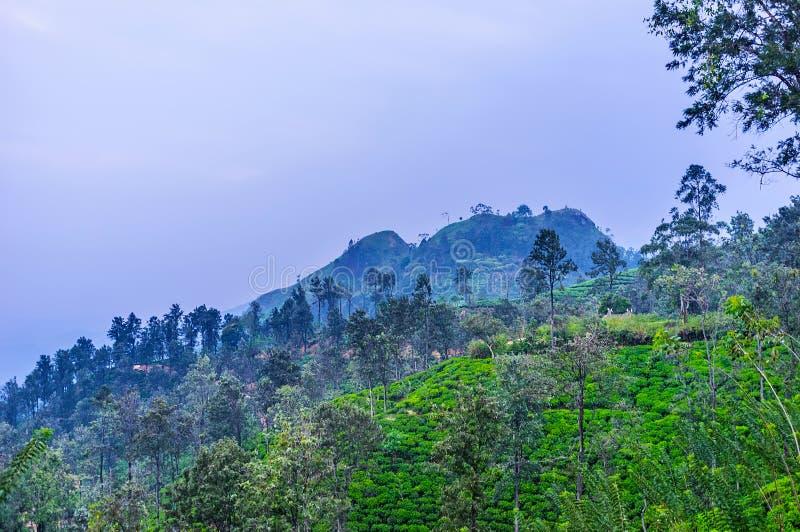 Evening view of Little Adam`s Peak, Sri Lanka stock photography