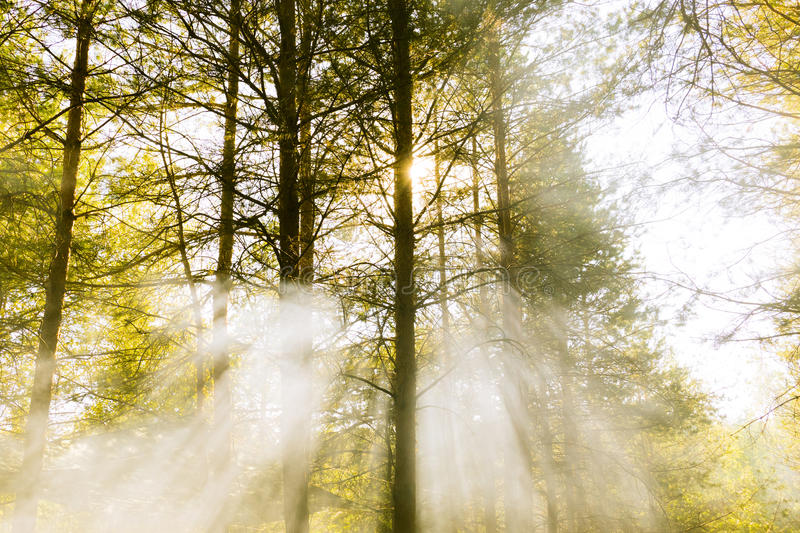 Evening in the woods royalty free stock photography
