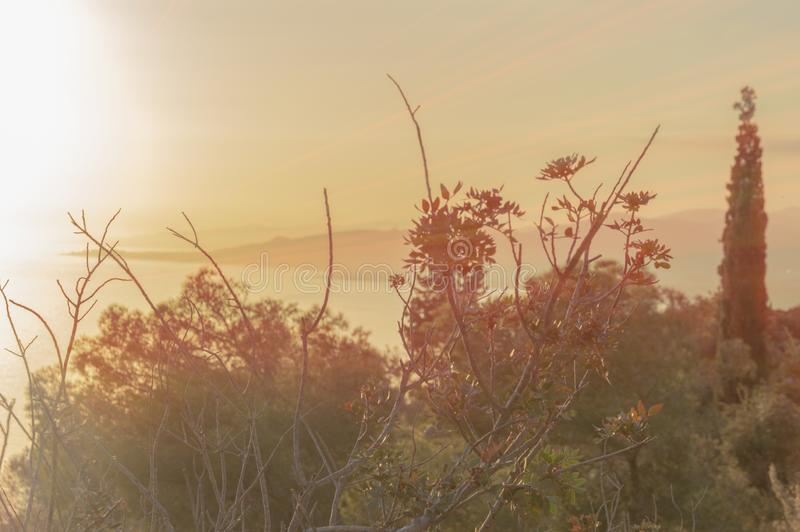 Evenings watching the sea and mountain with golden light. Oranges flowers royalty free stock images