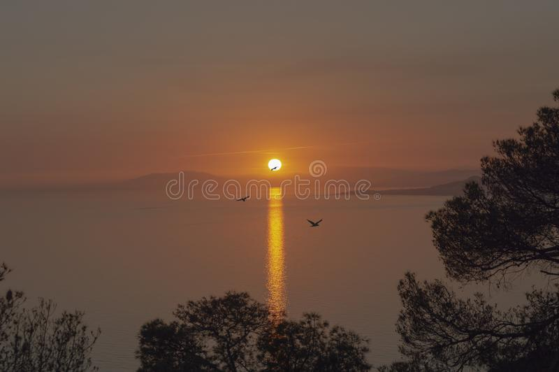 Evenings watching the sea and mountain with golden light. Oranges flowers stock photos