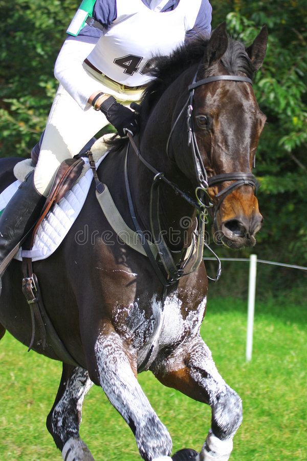 Eventing stock photography