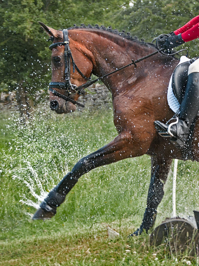 Eventing horse stock image