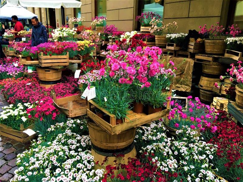 Evento di FLOR nella citt? di Torino, Italia Fiori, colori, bellezza e molla fotografie stock libere da diritti