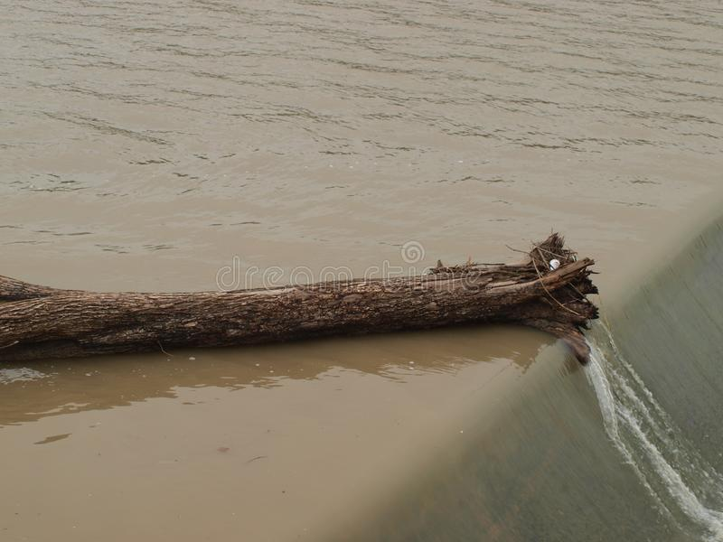 A Large Tree Trunk Hangs on Lip of Dam. Eventually, water power will move the big chunck of weed over the dam and onto the spillway. The currents are still very stock photos