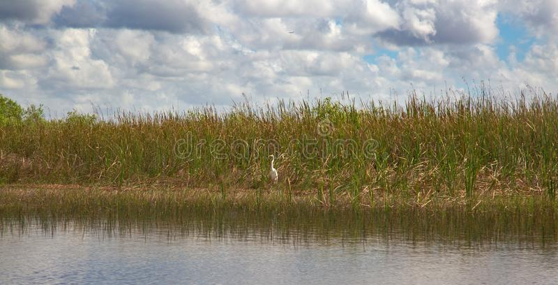 everglades στοκ φωτογραφία με δικαίωμα ελεύθερης χρήσης
