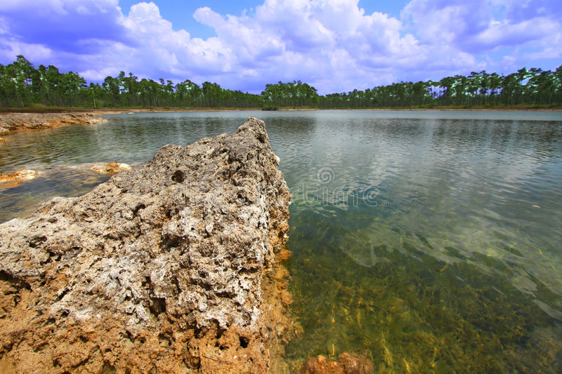 everglades εθνικό πάρκο ΗΠΑ στοκ εικόνες με δικαίωμα ελεύθερης χρήσης
