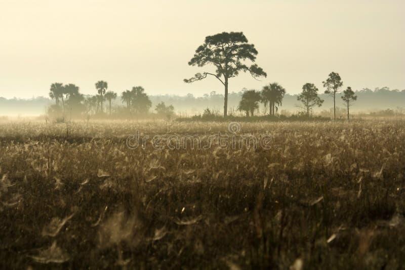 everglades ομιχλώδης χειμώνας πρω&iot στοκ εικόνα