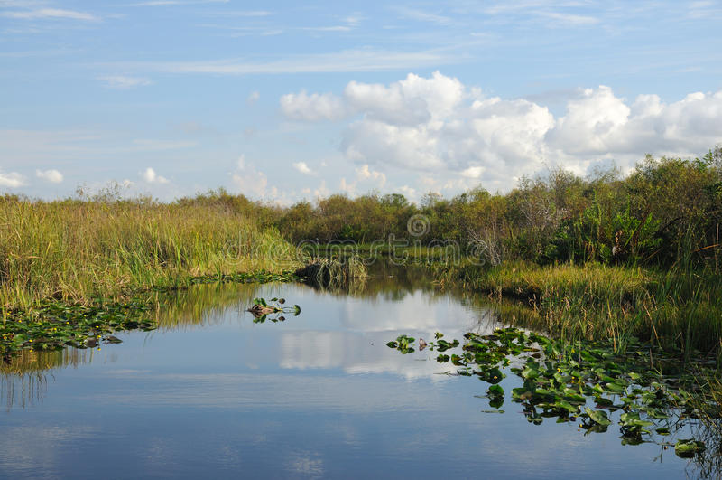 everglades τοπίο στοκ φωτογραφίες