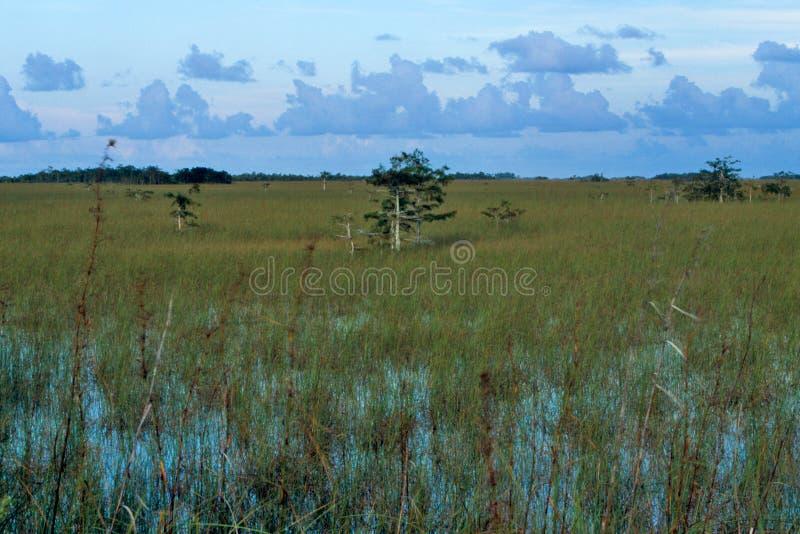 everglades τοπίο στοκ φωτογραφία με δικαίωμα ελεύθερης χρήσης