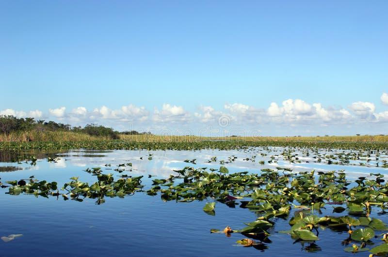 everglades υγρότοπος στοκ εικόνες