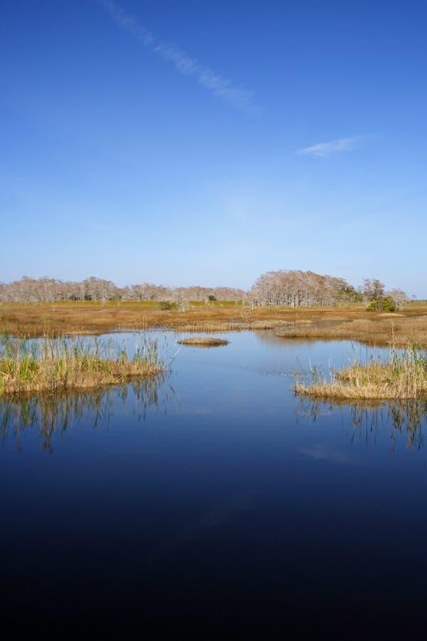 everglades φυσικός στοκ φωτογραφίες με δικαίωμα ελεύθερης χρήσης