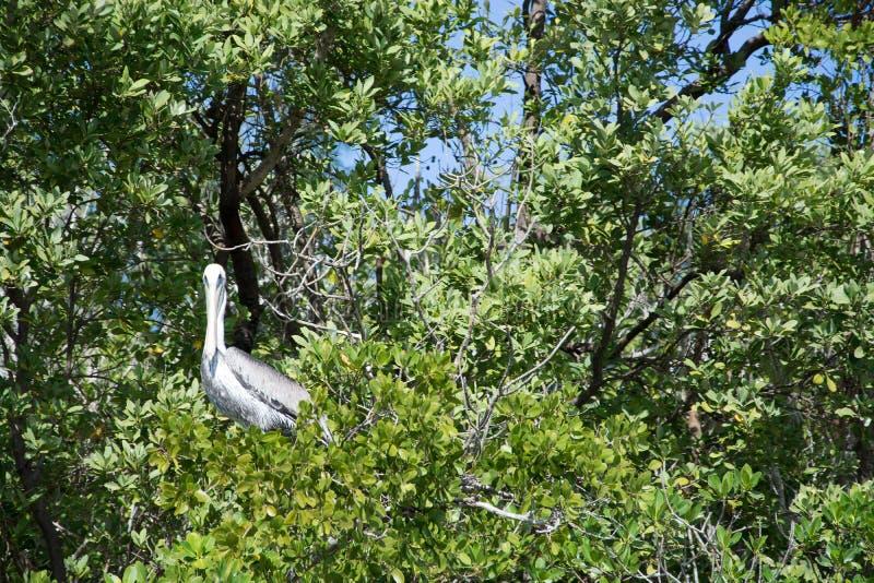Everglades, Φλώριδα, ΗΠΑ στοκ εικόνα