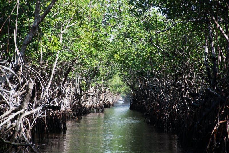 Everglades, Φλώριδα, ΗΠΑ στοκ εικόνες