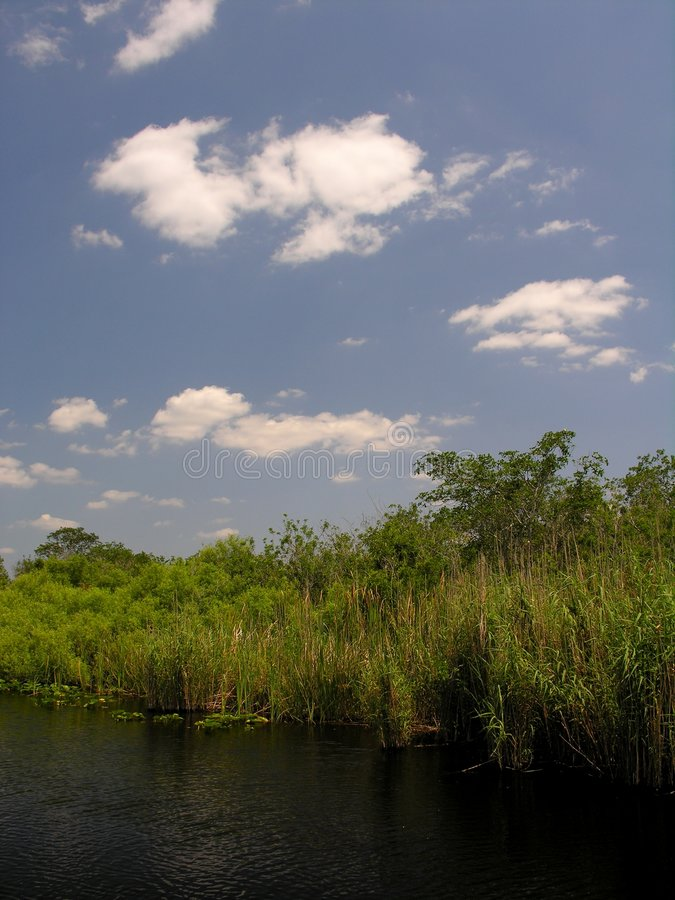 Download Everglades Royalty Free Stock Images - Image: 127529