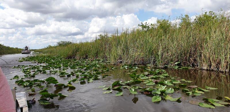 Everglades photographie stock libre de droits