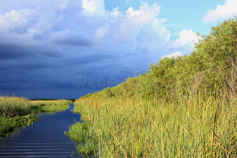 Download Everglades stock photo. Image of yellow, summer, landscape - 26510332