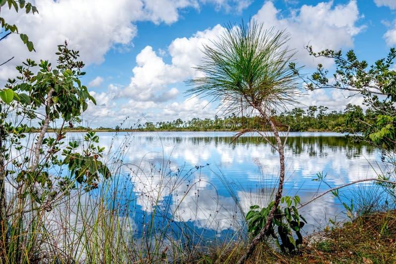 Everglades 0352 στοκ εικόνες με δικαίωμα ελεύθερης χρήσης