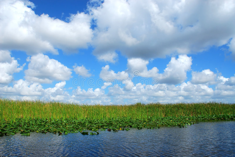 In The Everglades Royalty Free Stock Photography