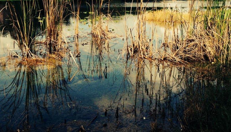 everglades стоковые фото