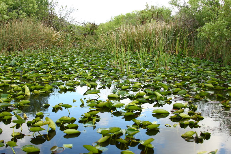 The Everglades royalty free stock images