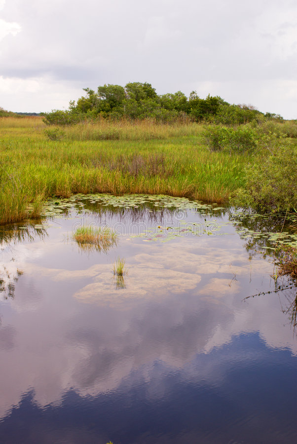 Everglades Canal Landscape royalty free stock photos
