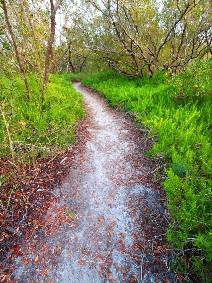 Everglades Coastal Prairie Trail royalty free stock image