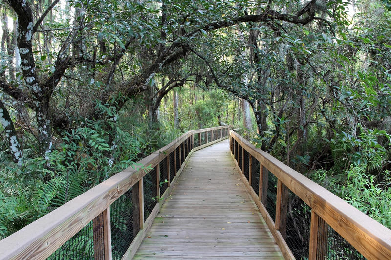 Everglades Cypress Swamp Royalty Free Stock Images
