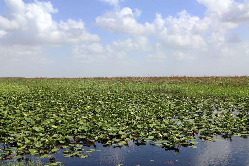 Everglades, Florida. Scenic landscape Florida Everglades in summertime stock image