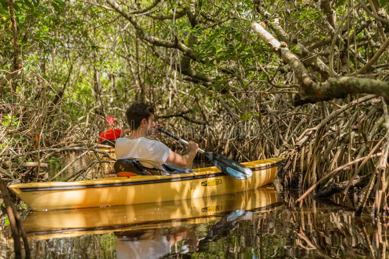EVERGLADES, FLORIDA, USA - AUGUST 31: Tourist kayaking in mangro. Ve forest on August 31, 2014 in Everglades, Florida, USA royalty free stock photography